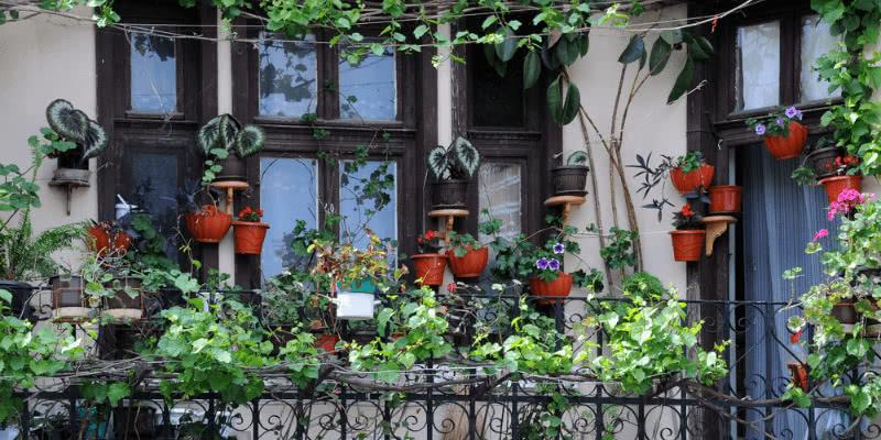 Rośliny na balkonie - jak pielęgnować je latem?